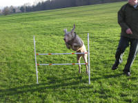 Buy Hoopers Hoops Dog Agility Uk